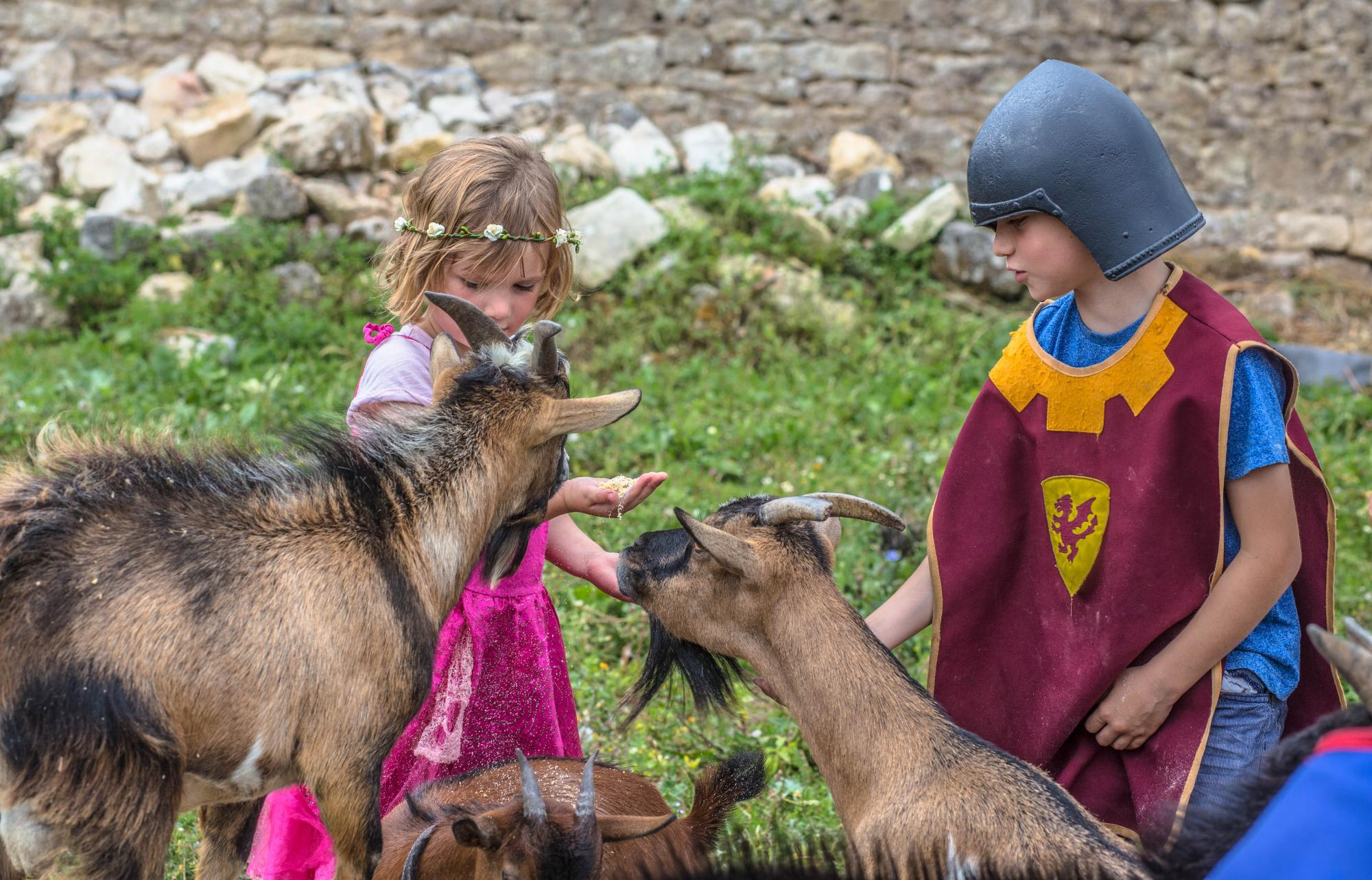 The castle farmyard - Fortified castle and medieval theme park in Charente Maritime